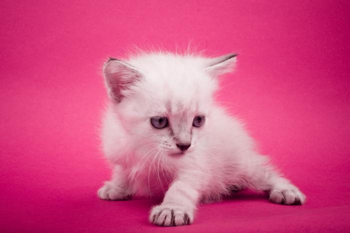 猫の餌はどれが安全?おすすめキャットフードランキング!上手な与え方も必見
