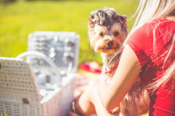 愛犬元気が安いのはなぜ?成分調査で安全性を確認した結果とは!