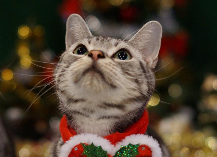 シンプリーは猫の健康に良いフード?成分調査&3ヶ月与えてわかったこと